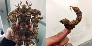 Japanese Student Creates Superhero Figures Out Of Insect Shells