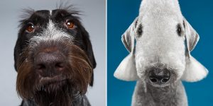 """The Dogs Show"": Photographers Explore The Amazing World Of Dog Breeds"