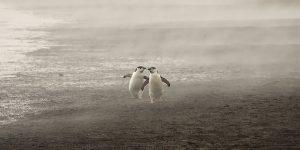 """Creatures Of The Cold"": Spectacular Winning Photos Of The Annual Antarctic Photography Exhibition"