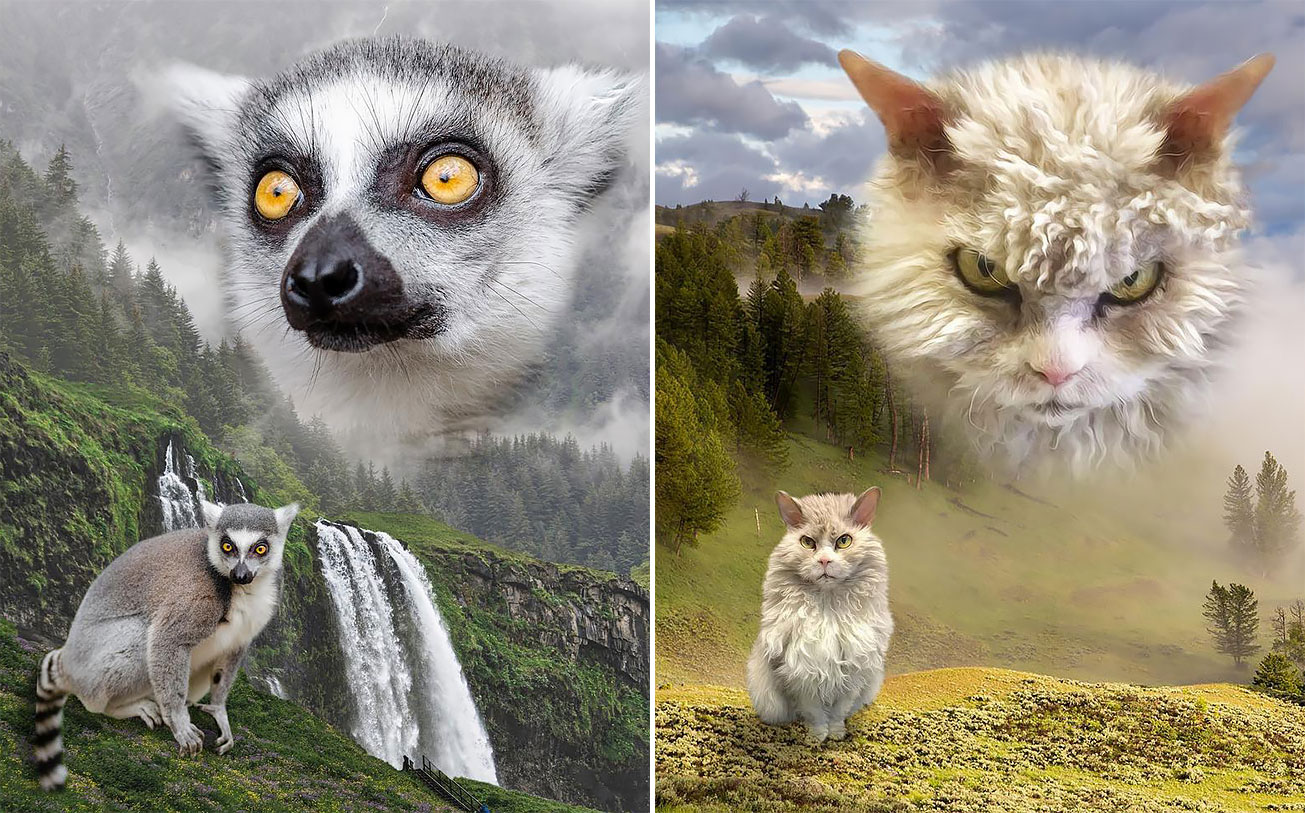 Wild Masterpieces These Glamour Shots Of Animals Are