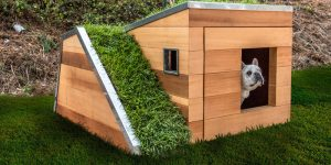 Studio Schicketanz Have Designed A Modern Dog House With A Green Roof