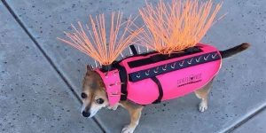 Anti-Coyote Vests For Dogs Are More Punk Rock Than You'd Expect