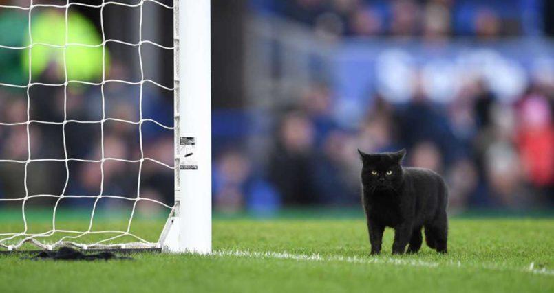 A Black Cat Interrupted A Football Match And