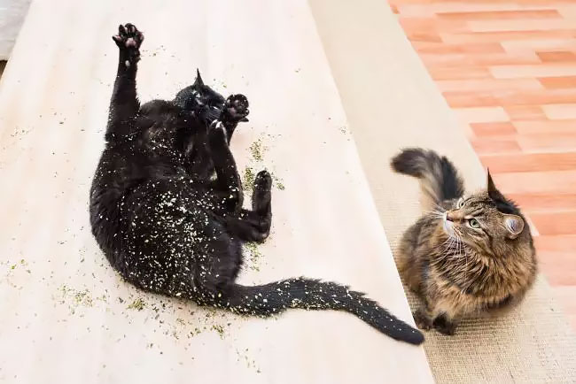Photographer Takes Photos Of Cats High On Catnip, And The
