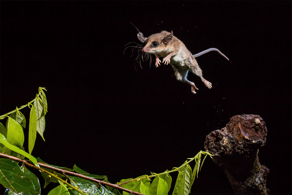 Royal Society Of Biology Photographer Of The Year 2019: The Shortlist