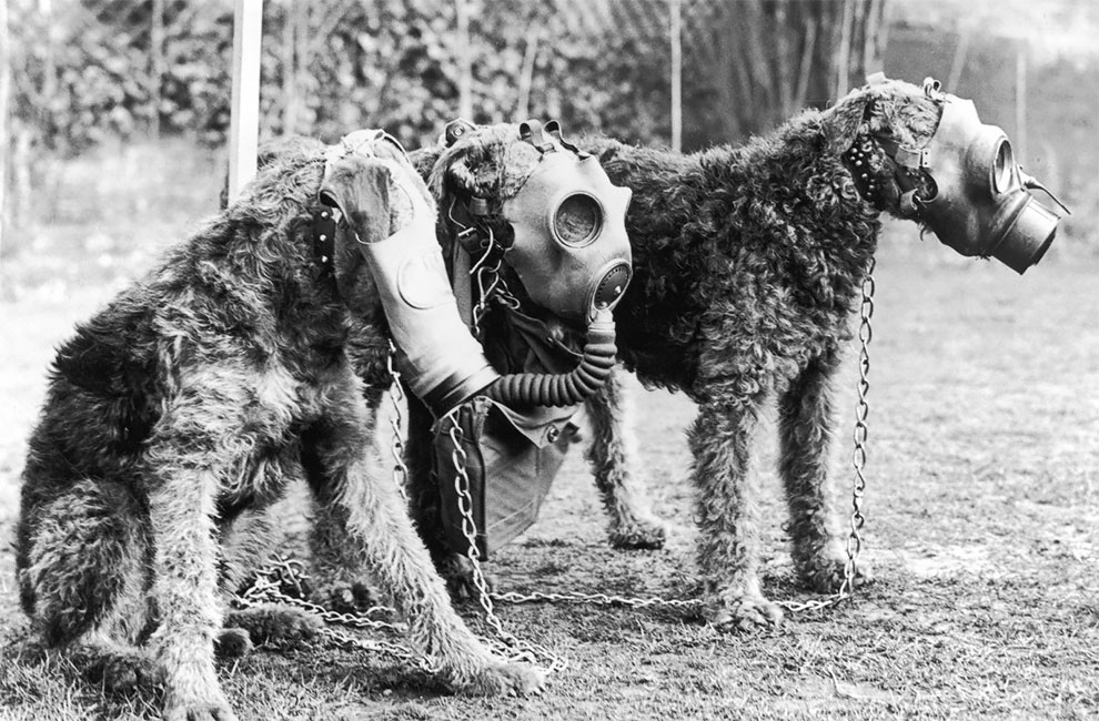 Stunning Vintage Photos Of Pets Wearing Gas Masks During The World War I