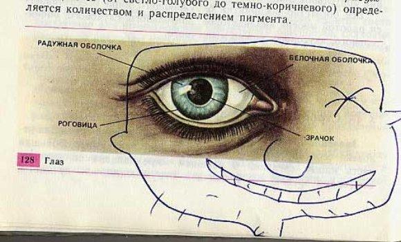 3285311697 87ec776f60 o Biology Drawings