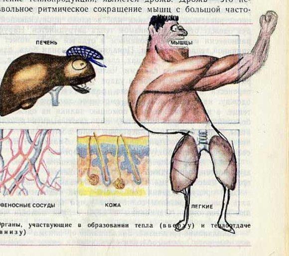 3285317691 5aeb4bab37 o Biology Drawings