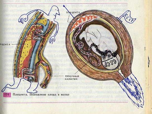 3286135194 8ea6ff6ac4 o Biology Drawings