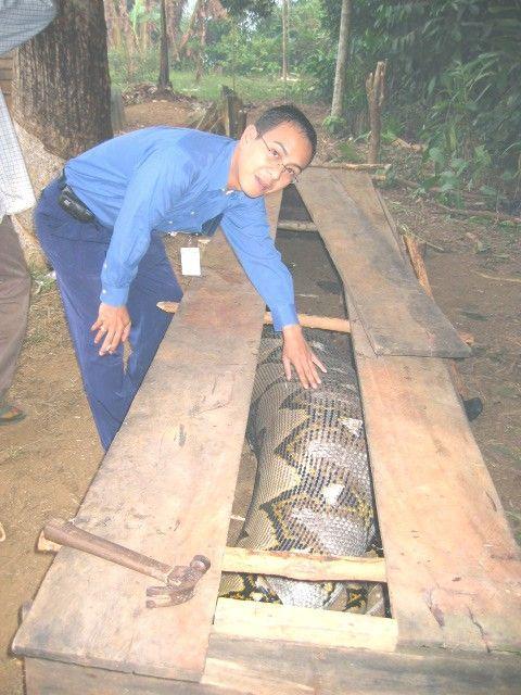 anaconda_03 - Real Anaconda - Weird and Extreme