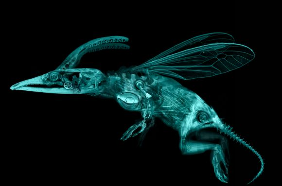animabase creature2 anatomy merged 800size Analysis creature design series