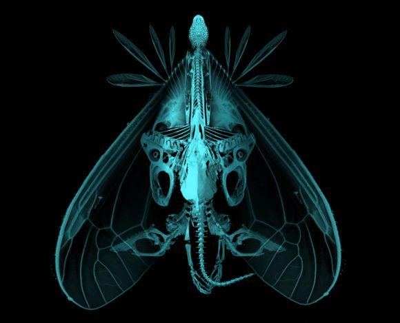 animabase creature analysis 700size Analysis creature design series