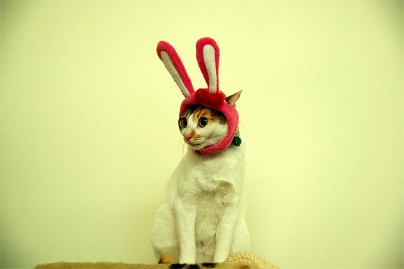 kittyhat6 Kitty Hat 6