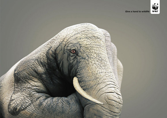 wwfelephant small give a hand to wildlife campaign