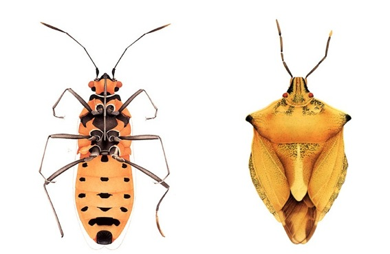 CorneliaHesseHoneggerMorphologicallyDisturbed5 Cornelia Hesse Honegger Disturbed Insects