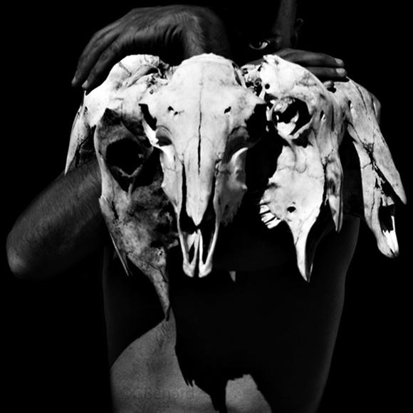 GBenardvultureseye A Vultures Dance