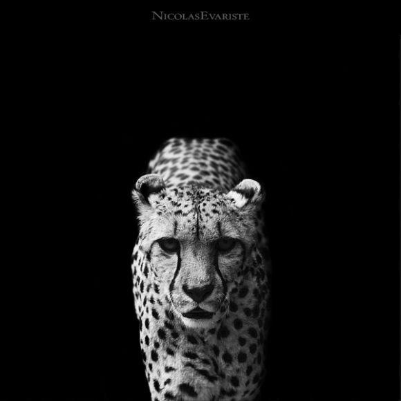 NicolasEveristedarkzoo1 Nicolas Everiste   Dark Zoo