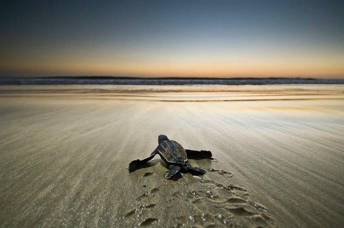 2 173 Natures Best Photography: 2010 Ocean Views