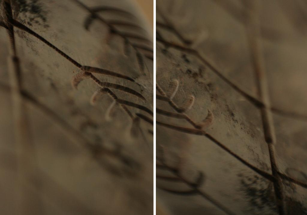Macro Photography Trick