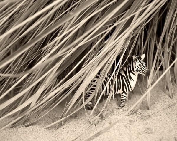 JeffFriesen3 Black and White Photography by Jeff Friesen